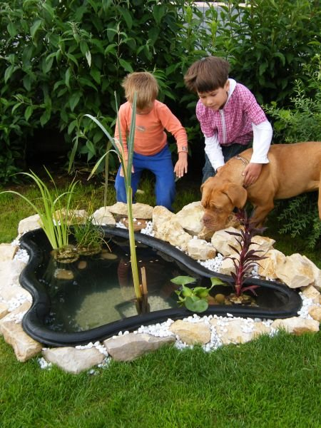 Forum aquajardin bassin koi jardin aquatique mare for Coque bassin poisson